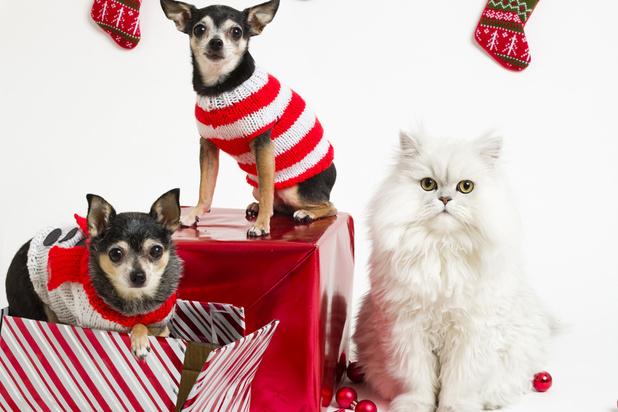 Nos animaux de compagnie sont eux aussi gâtés à Noël