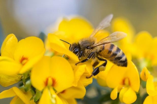 L'agriculture bio loin d'être épargnée par les néonicotinoïdes