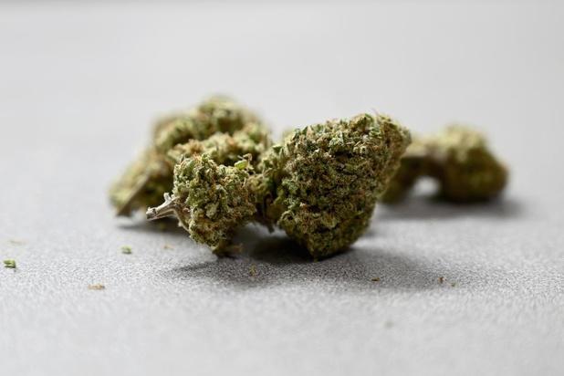 Tien kilogram cannabis gevonden bij huiszoeking in Spiere-Helkijn