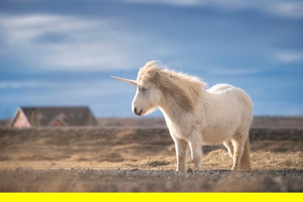 Nourrir des poneys ou faire émerger des licornes?