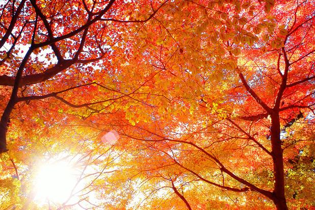 Mysterie van de dag: waarom verkleuren bladeren in de herfst?