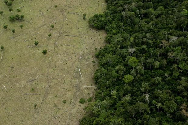 Amazonie : la viande belge contribue à la déforestation