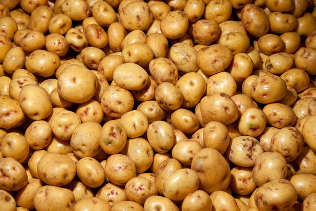 """Sécheresse, covid, Brexit : """"La culture de pommes de terre devient un passe-temps coûteux"""""""