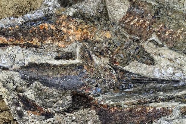 Nieuwe fossielen tonen laatste momenten van dinosaurussen