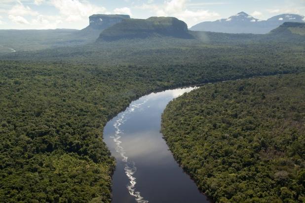 Tropische bossen zijn verzadigd en worden steeds meer bron van CO2-afgifte