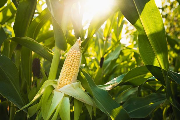 Les entreprises chinoises ont cessé d'acheter des produits agricoles américains