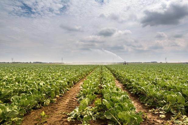 Le prix des terres agricoles flambe en Belgique