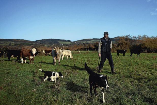 La rentabilité s'est encore détériorée l'an dernier dans le monde agricole belge