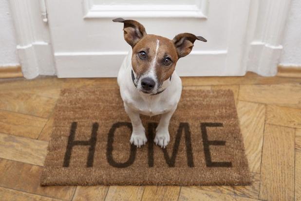 3 solutions pour faire garder votre animal de compagnie pendant les vacances