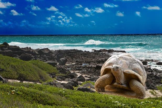 """Aux Galapagos, science et tourisme doivent copier la nature: """"s'adapter pour survivre"""""""