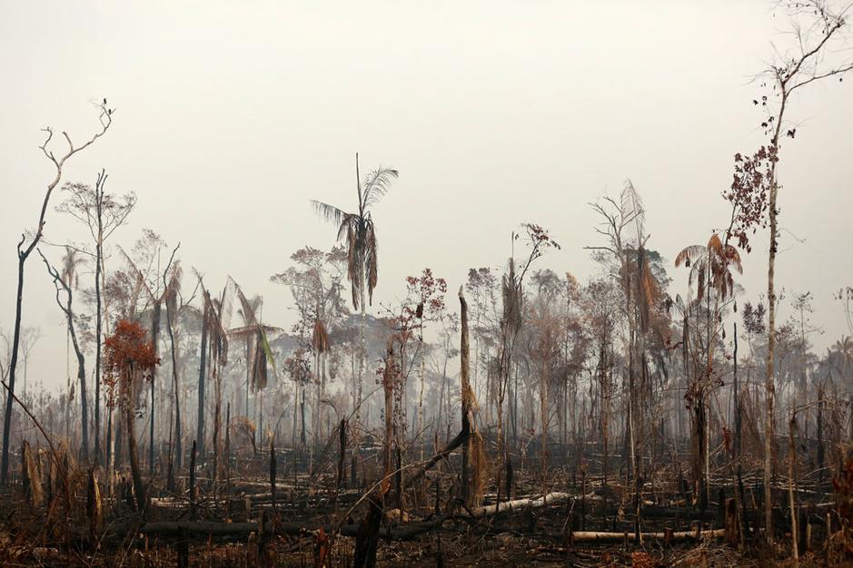 Wetenschappers over hun angsten bij de klimaatverhitting: 'Ik heb nooit publiekelijk gehuild. Nog niet'