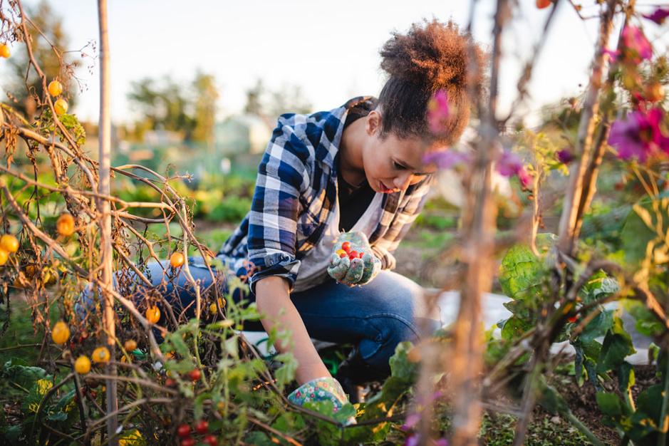 Tuintherapie: 'Bij milde depressies kan tuinieren even effectief zijn als antidepressiva'