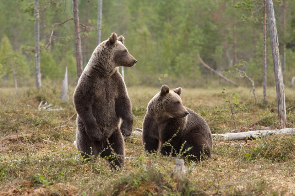 Finland is het beste reisland om dieren in het wild te zien