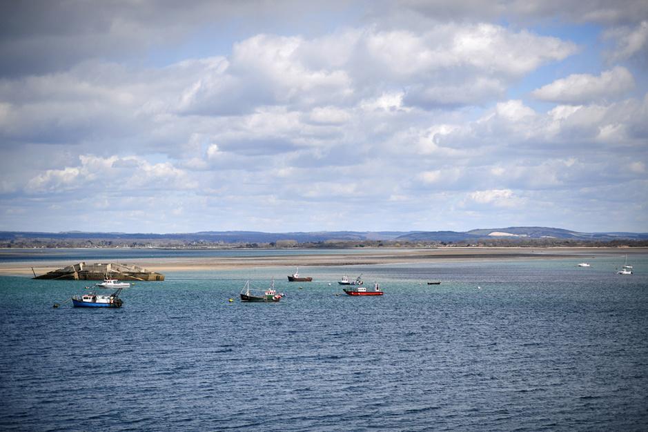 La résurrection de l'huître de Portsmouth