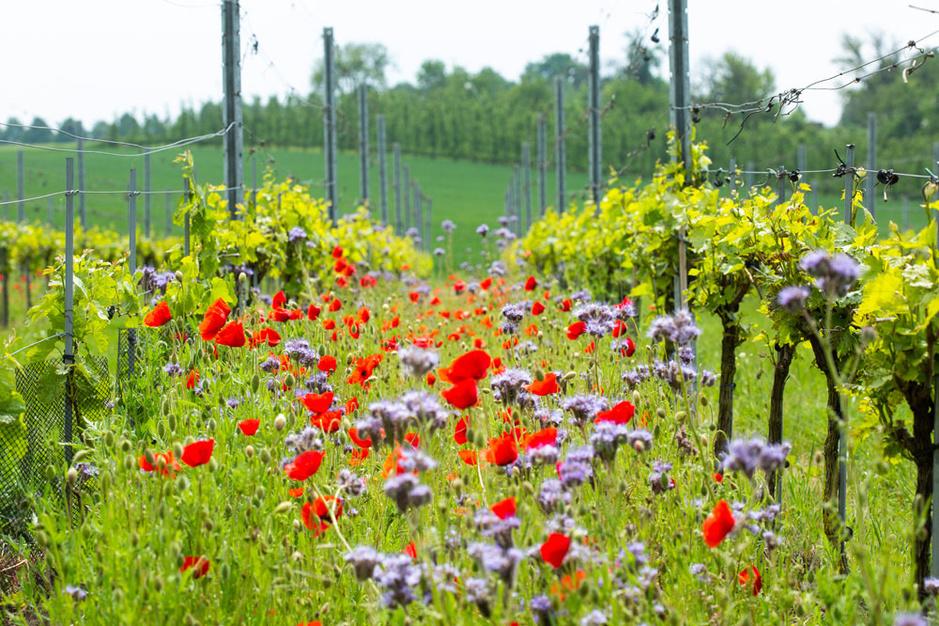 Chardonnay van de chef: vijf Belgische restaurants die zelf hun wijn maken