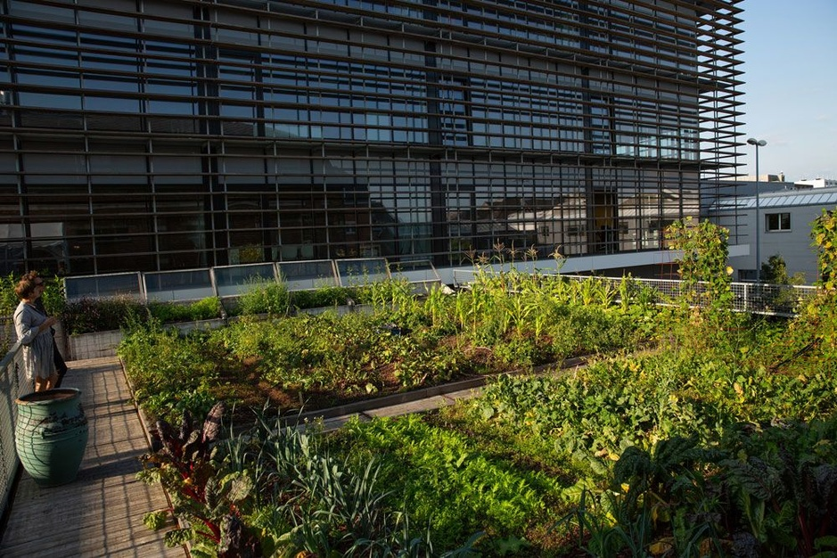 Dakmoestuinen: drie pioniers banen de weg naar een groenere stad