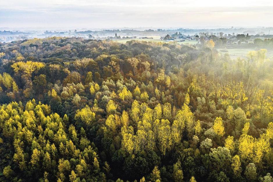 'Kappen kan perfect passen in verantwoord bosbeheer'