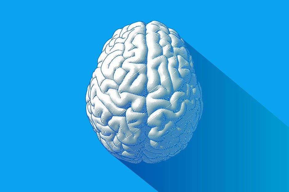 Waarom is ons brein zo groot?