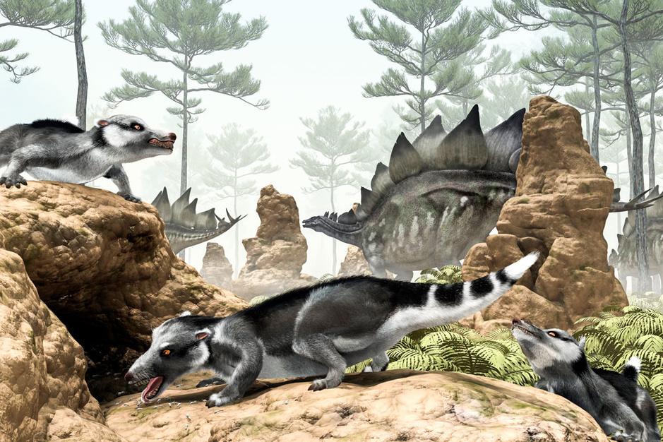 Nieuwe vondsten werpen ander licht op evolutie van zoogdieren