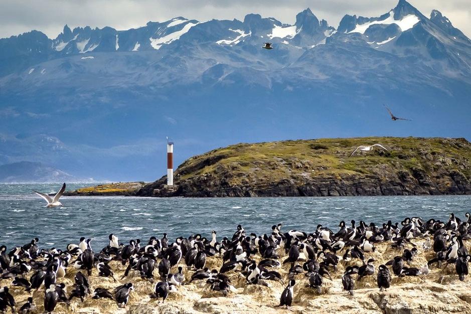In het zog van Darwin: Dirk Draulans trekt naar het Zuid-Amerikaanse Vuurland
