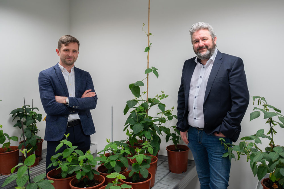 Nieuwe Gentse spin-off Protealis strijdt voor lokale sojateelt