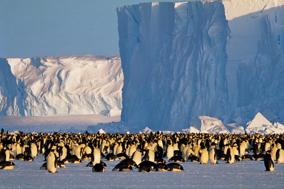 Ontdek de meest spectaculaire dierenmigraties in de wereld
