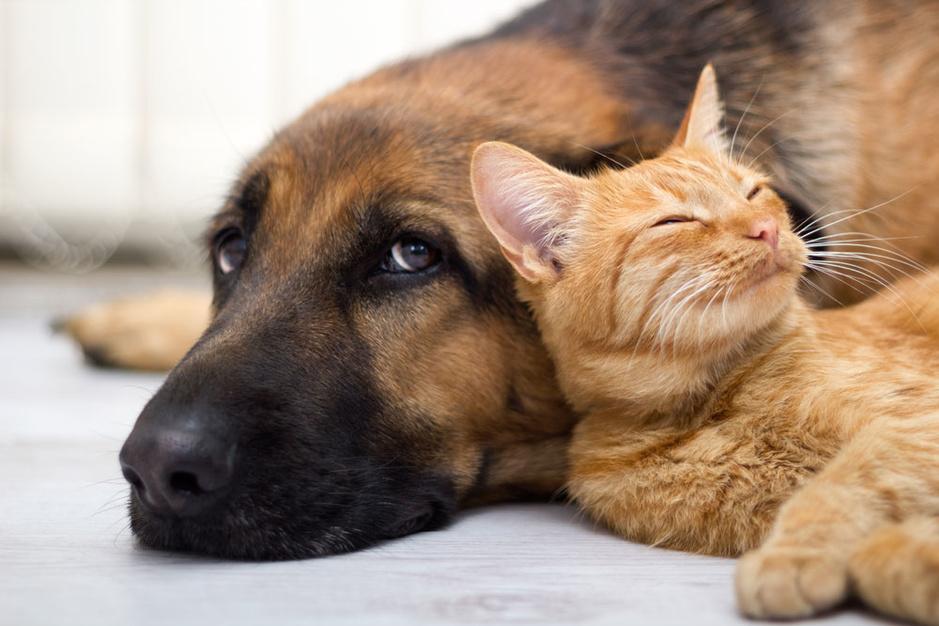 Huisdieren houden: is het altijd gezond voor ons (en hen)?