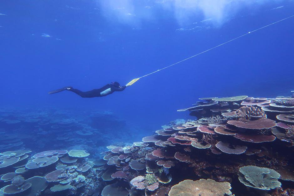 Het Australische Great Barrier Reef is dan toch (nog) niet dood