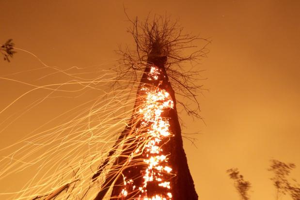 Meer dan 10.000 vierkante kilometer ontbost in Amazonegebied in jaar tijd
