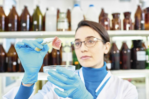 Viande in vitro, chair à canon ou amnestie éco-responsable ?