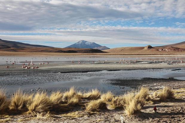 L'Altiplano : les extrêmes dans la Cordillère des Andes