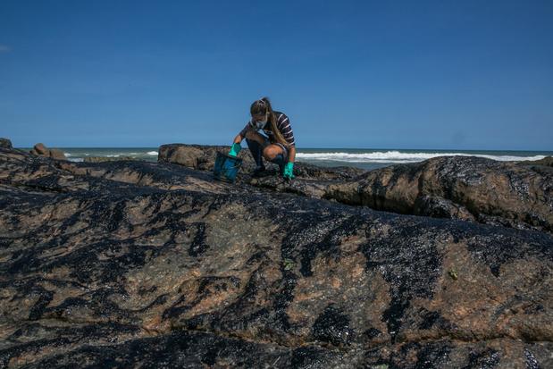 WWF: 'Olievlek voor Brazilië tragedie voor mariene ecosysteem'