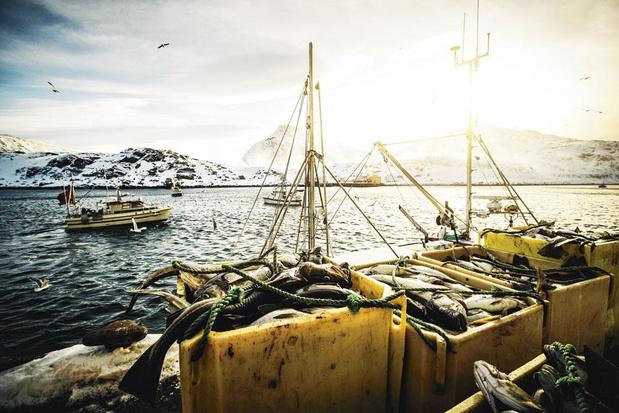 Les Pays-Bas attaquent l'interdiction de la pêche électrique à la Cour de Justice de l'UE