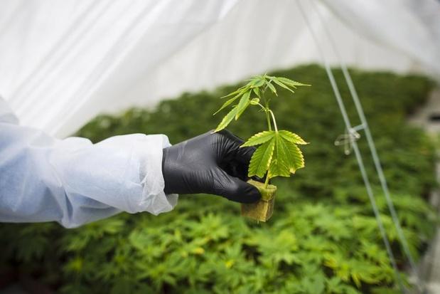 Au Colorado, le cannabis comestible envoie du monde aux urgences