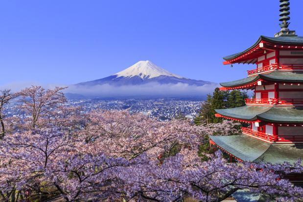 Kersenbloesem seizoen in Japan zal dit jaar vroeg zijn