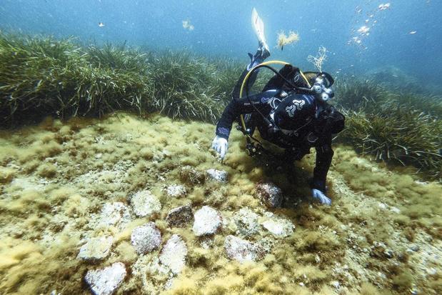 Avec les sauveteurs de corail, en mer et en labo (Reportage)