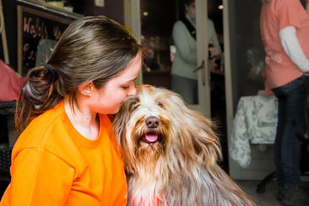 """Date a Dog geannuleerd door aangekondigde hittegolf: """"Welzijn van de honden gaat voor"""""""