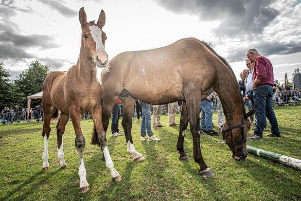 Animal Rights kritisch voor verloting veulen op Pittemse prijskamp