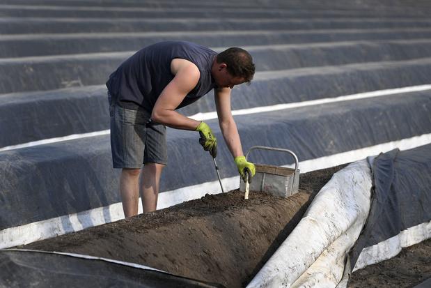 Land- en tuinbouwsector kampt met tekort aan 15.000 tot 20.000 seizoensarbeiders