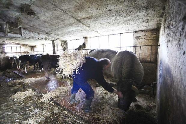 En près de 40 ans, la Belgique a perdu 70% de ses fermes