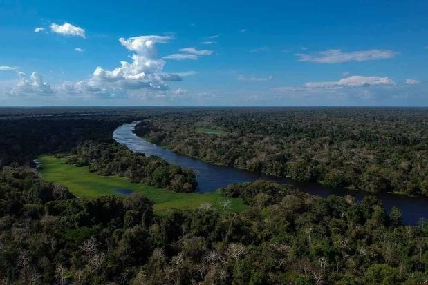 La déforestation de l'Amazonie, alimentée par la violence de mafias et l'impunité au Brésil