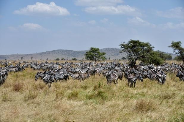 Bevolkingsgroei rond Serengeti drijft dieren in het nauw