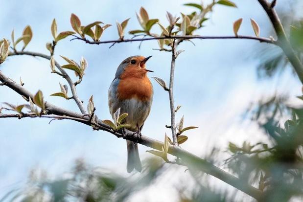 Préparez vos jumelles, Natagora organise bientôt son grand recensement d'oiseaux