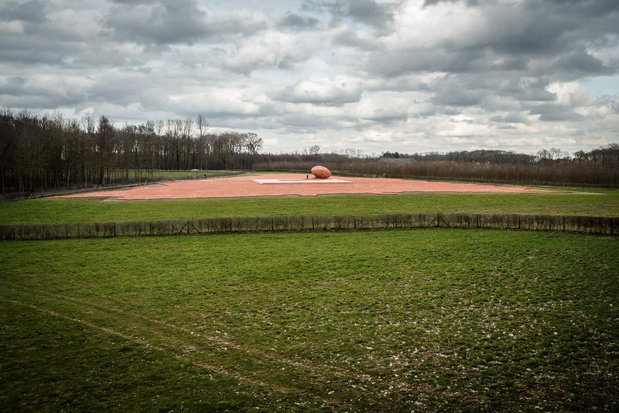 Provincie West-Vlaanderen breidt domein Palingbeek uit om kamsalamanders te helpen