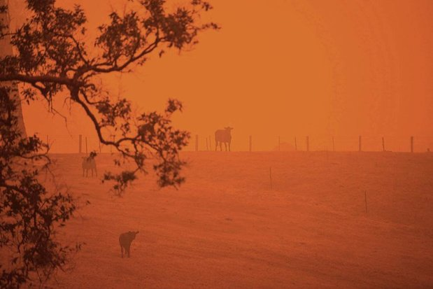 Antwerpse arts getuigt over Australische bosbranden