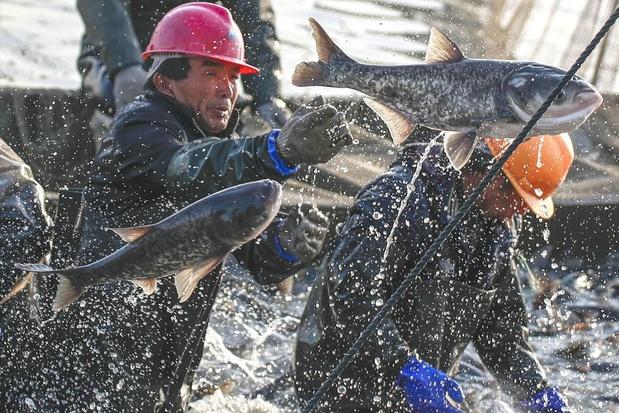 Schotse vissers klagen nood bij Boris Johnson: 'We kregen het slechtste van twee werelden'