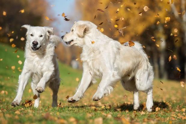 'Straathonden zijn geen huishonden: een zwerfhond in huis halen houdt veel risico's in'
