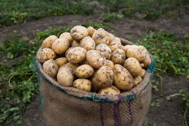 Aardappelverwerker uit Blankenberge beboet voor milieu-inbreuken