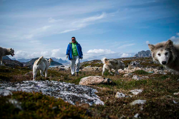 Les chiens de traîneau du Groenland (en images)