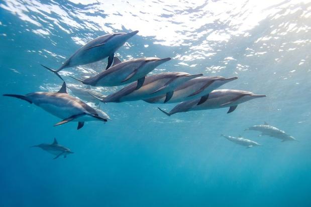 Klimaatverandering brengt dolfijnen in de problemen